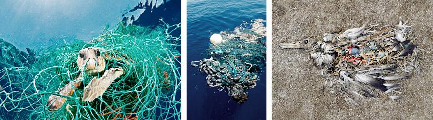 Meerestiere und Plastikmüll Parley
