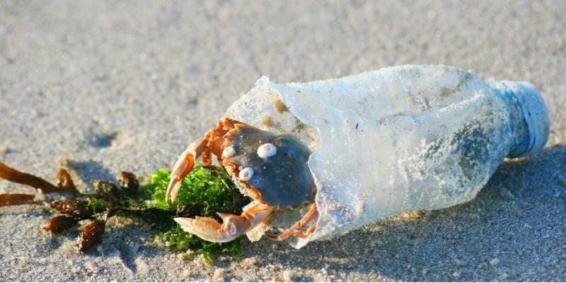 Krabbe in Plastikflasche