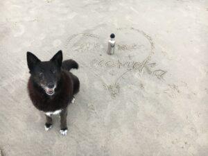 Hund am Strand mit Edelstahlflasche