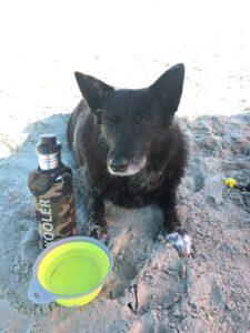 Hund mit Edelstahlflasche